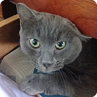 Adopt A Pet :: Angel - San Leandro, CA