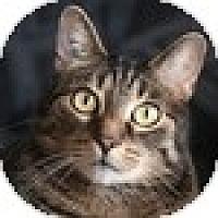 Adopt A Pet :: Hazelle - Vancouver, BC