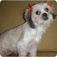 Adopt A Pet :: Leisa - Mooy, AL