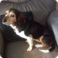 Adopt A Pet :: Sissy - Novi, MI