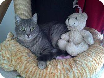 Domestic Shorthair Cat for adoption in Calimesa, California - Selah