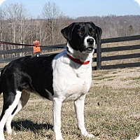 Adopt A Pet :: Reba - La Follette, TN