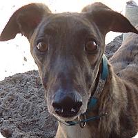 Adopt A Pet :: Backwood Count - Longwood, FL