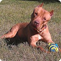Adopt A Pet :: Snoopy - Holmes Beach, FL