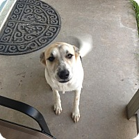 Adopt A Pet :: Dayley-Coutesy Post - Burleson, TX