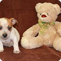 Adopt A Pet :: Out of the Closet - Salem, NH