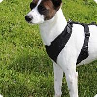 Adopt A Pet :: Asti - Grants Pass, OR