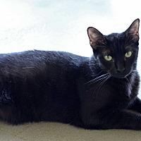 Adopt A Pet :: Liquorice - Carencro, LA
