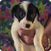 Adopt A Pet :: Ajax - Buffalo, NY