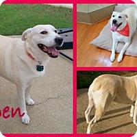 Adopt A Pet :: Aspen - Milton, GA