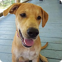 Adopt A Pet :: Marley - Seahurst, WA