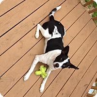 Adopt A Pet :: Moondance - Tallahassee, FL