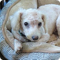 Adopt A Pet :: Tai - San Antonio, TX