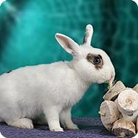 Adopt A Pet :: Gumbo - Marietta, GA