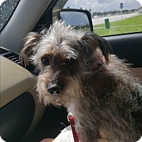 Adopt A Pet :: Scamp - Palm Bay, FL