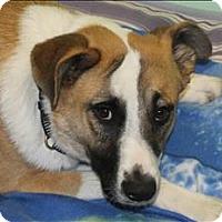 Adopt A Pet :: Andy - San Luis Obispo, CA