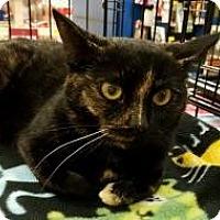 Adopt A Pet :: Mia - Rochester, MI