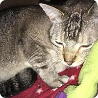 Adopt A Pet :: Salt - Tracy, CA