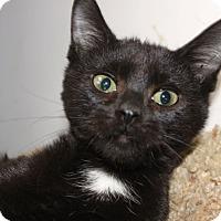 Adopt A Pet :: Maury - Louisville, KY