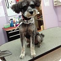 Adopt A Pet :: Camp - Houston, TX