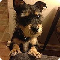 Adopt A Pet :: Leonardo - Forest Hills, NY