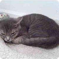 Adopt A Pet :: Lilac - Colmar, PA
