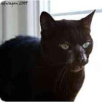 Adopt A Pet :: Doris - Xenia, OH