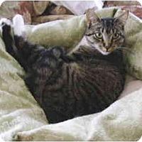 Adopt A Pet :: Cagney - Colmar, PA