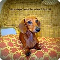 Adopt A Pet :: Oscar Meyer - Gadsden, AL