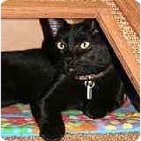 Adopt A Pet :: Murphy - Marietta, GA