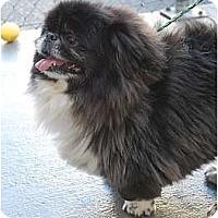 Adopt A Pet :: Gizmo - Virginia Beach, VA