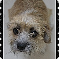 Adopt A Pet :: Snicker Doodle - Rockwall, TX