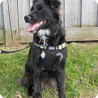 Adopt A Pet :: Bear - Hamilton, ON