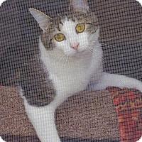 Adopt A Pet :: Thomas - St. Charles, MO