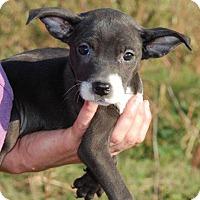 Adopt A Pet :: Reagan - Milford, CT