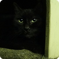 Adopt A Pet :: Clarice - Elyria, OH
