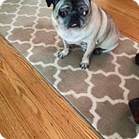 Adopt A Pet :: Trey - Huntingdon Valley, PA