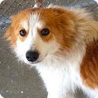 Adopt A Pet :: Kelci - Rockville, MD