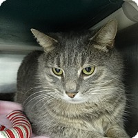 Adopt A Pet :: Ithica - Elyria, OH