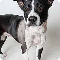 Adopt A Pet :: *LEFTY - Sacramento, CA