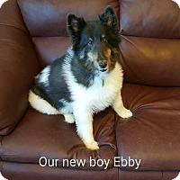 Adopt A Pet :: Ebby - Barnesville, GA