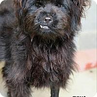 Adopt A Pet :: Fiona - Camden, DE
