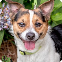 Adopt A Pet :: Trevor - Savannah, GA