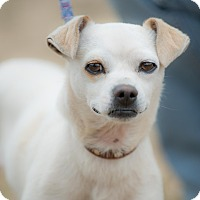 Terrier (Unknown Type, Small) Mix Dog for adoption in Poway, California - EMMET