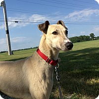 Adopt A Pet :: Marigold - Grand Rapids, MI
