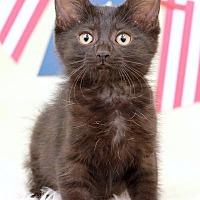 Adopt A Pet :: Merlot - Sterling Heights, MI