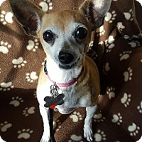 Adopt A Pet :: Violet - Romeoville, IL