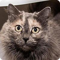 Adopt A Pet :: Jasmine - Prescott, AZ