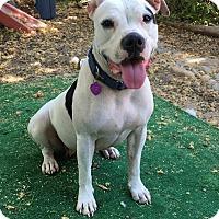 Adopt A Pet :: Nikki - Lincoln, CA