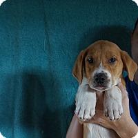 Adopt A Pet :: Okie - Oviedo, FL